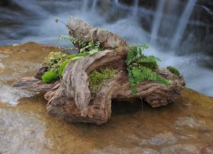 moss-and-fern-3113837