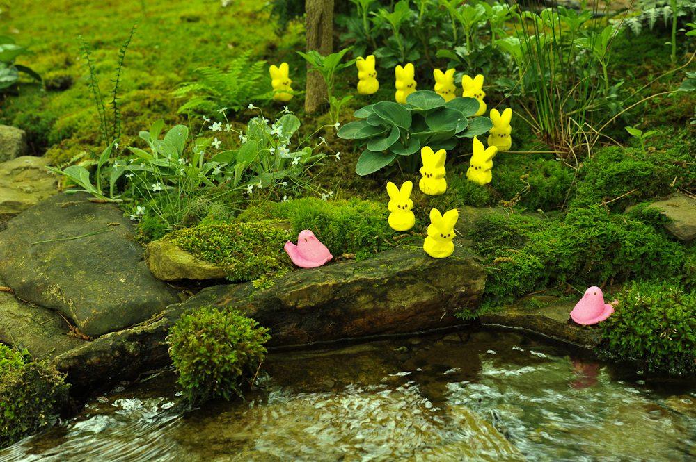 2-pink-ducks-2597859