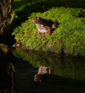 the-learned-old-frog-reflecting-6650048