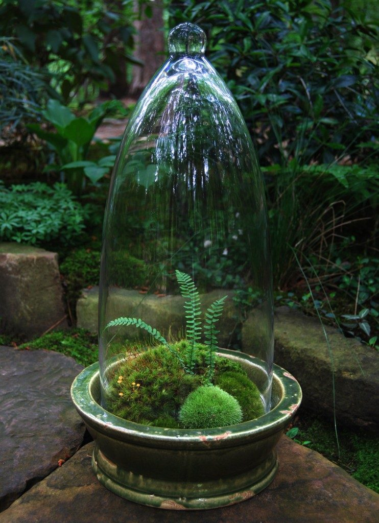 tall-moss-terrarium-742x1024-9071830