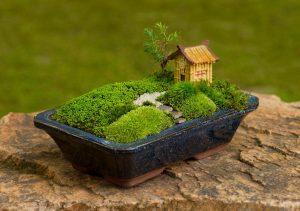 bonsai-3590699