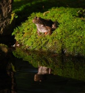 frog-reflect-272x300-2726353