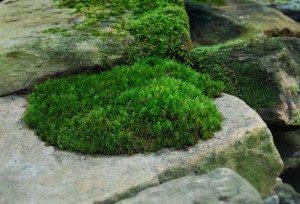 moss-acidity-300x204-2751979