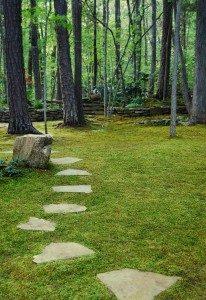 moss-path-msg-206x300-4197122