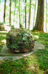 rolling-stone-196x300-7884368