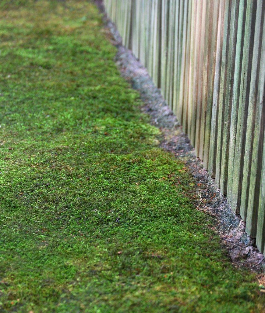 moss-line-870x1024-2512801