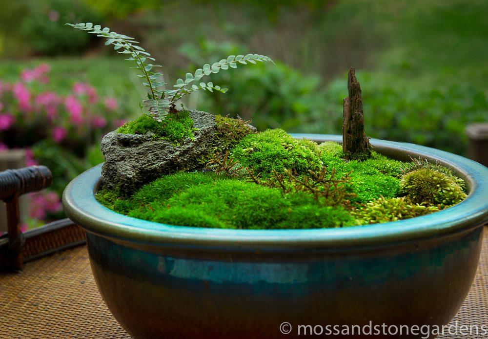 love-a-lava-moss-rocks-9681007