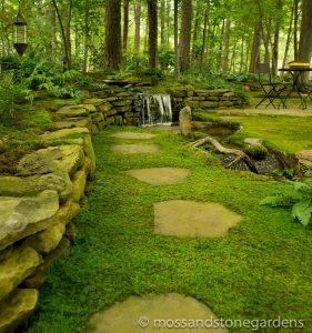 moss-between-pavers-6323780
