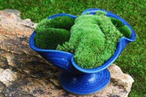 blue-pedistal-moss-small-5951248