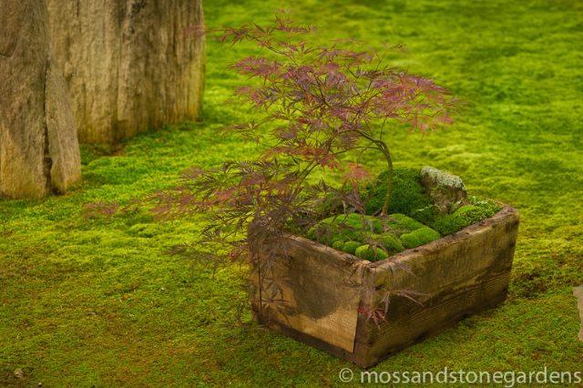 box-moss-dish-garden-4686013