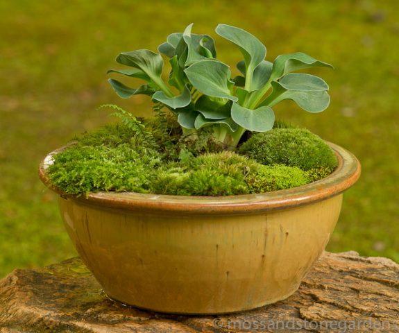 brown-moss-dish-garden-1826282