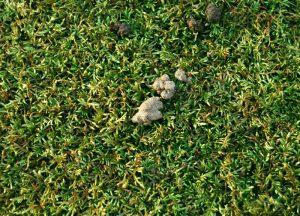 earthworm-castings-moss-rocksjpg-3382760
