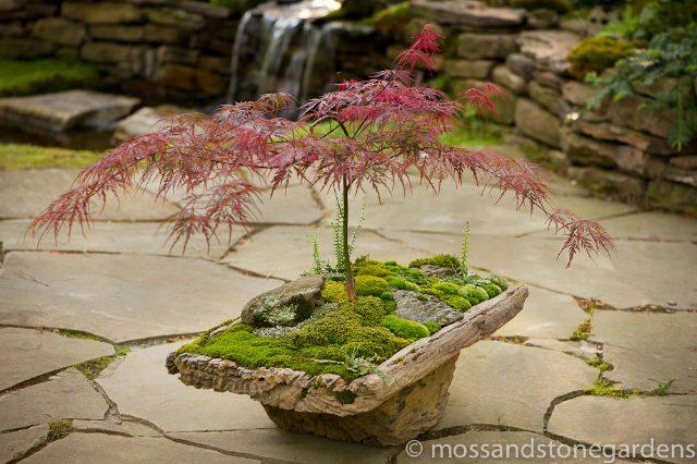 moss-dish-garden-4704867