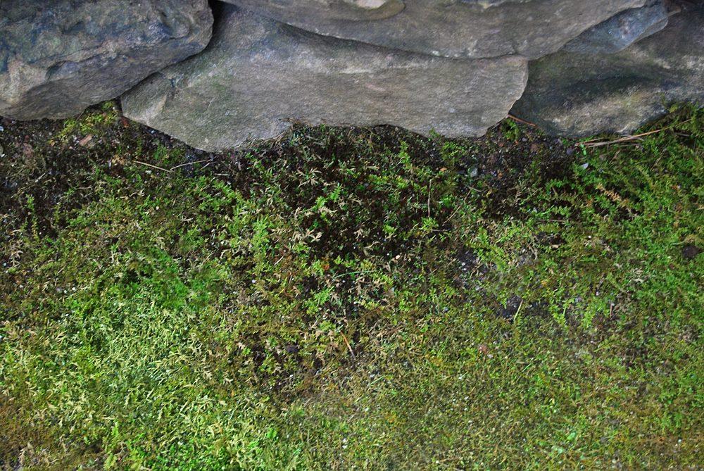 failing-mosses-moss-rocks-7036497