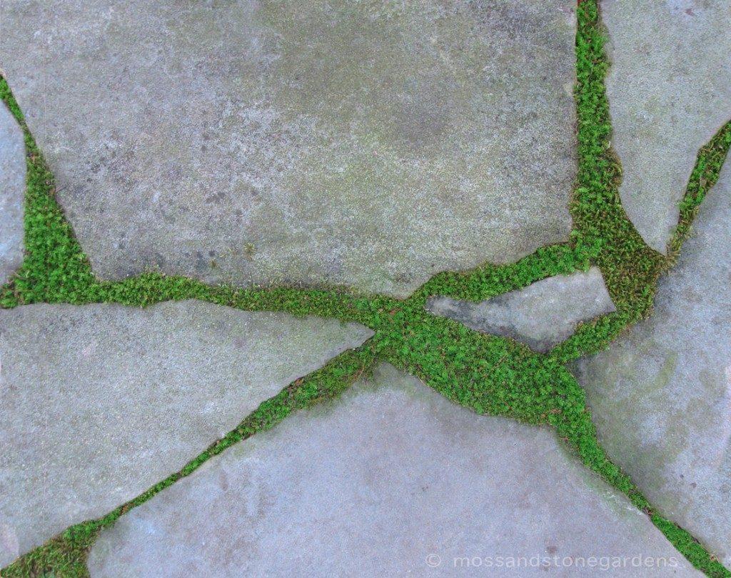 moss-flagstone-1024x809-8990471