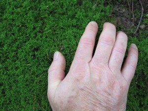 moss-collecting-2-300x224-6310622