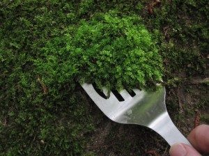 moss-collecting-300x224-7886633
