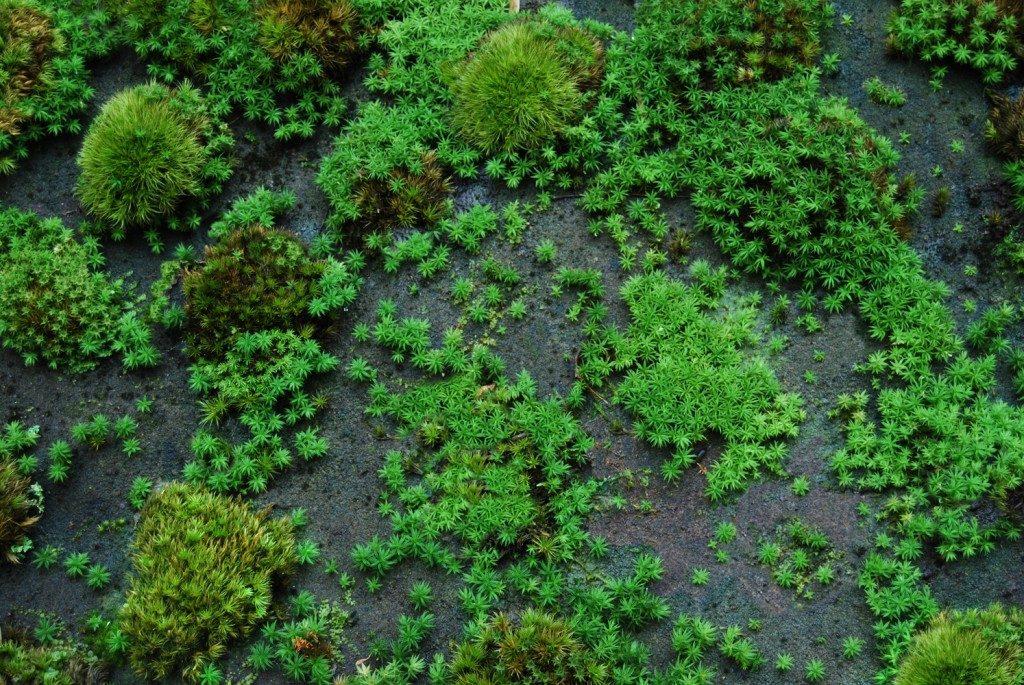 moss-rocks-acro-spreading-1024x685-8660804