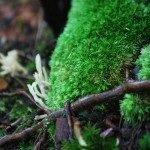 coral-fungi-150x150-4568376