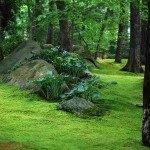 moss-boulder-150x150-9124089