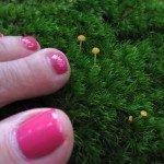 toe-fungus-150x150-4771167