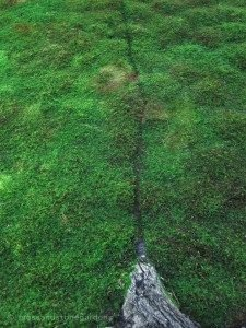 ant-moss-trail-225x300-6339570