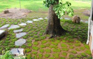 moss-installation1-300x191-7912695