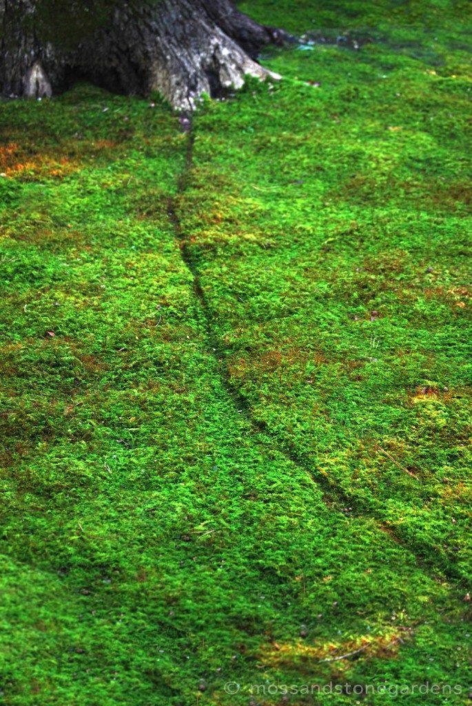 moss-trail1-685x1024-7046543