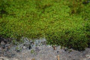 sandy-moss-300x200-7685194
