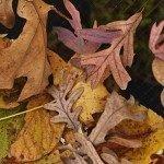 leaf-netting-150x150-3266852