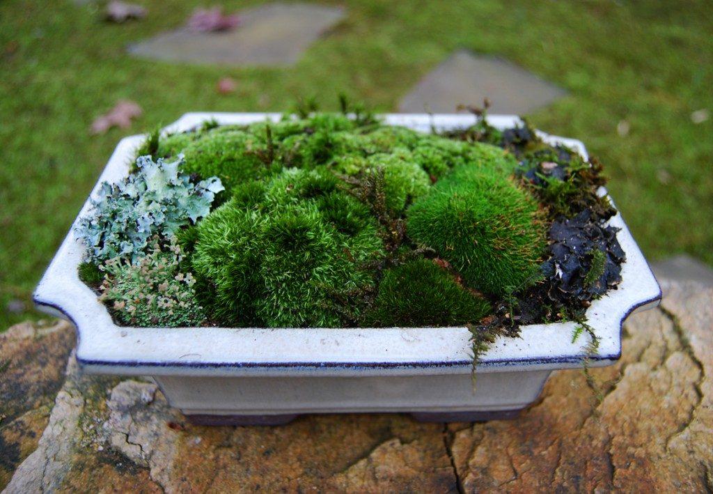 moss-dish-garden12-1024x709-8404455