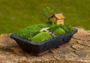 bonsai-300x210-2948374